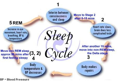 stages of the sleep wake cycle You cycle through 4 stages of non-rem sleep and one stage of rem sleep several times every night  what to know about rem and non-rem sleep  when they do wake .