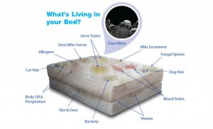 mattress care and cleaning for a dirty mattress